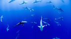 Applying Shark Science to Human Health