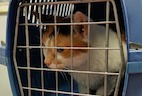 Cages, Stress, and Upper Respiratory Infection in Shelter Cats