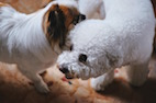Can Sniffing Behavior Help Dogs Recognize Themselves?